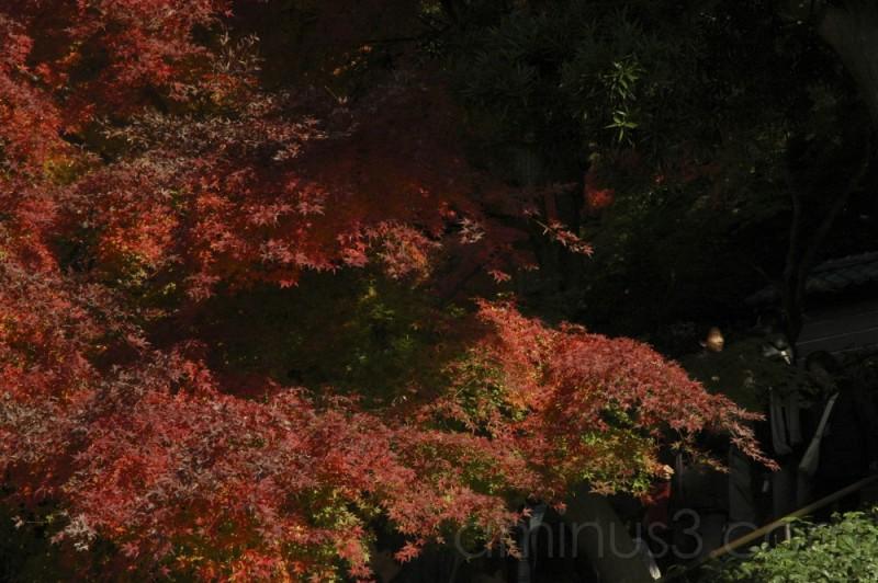 Autumn Leaves in Kamakura