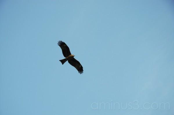Fly High, like an Eagle