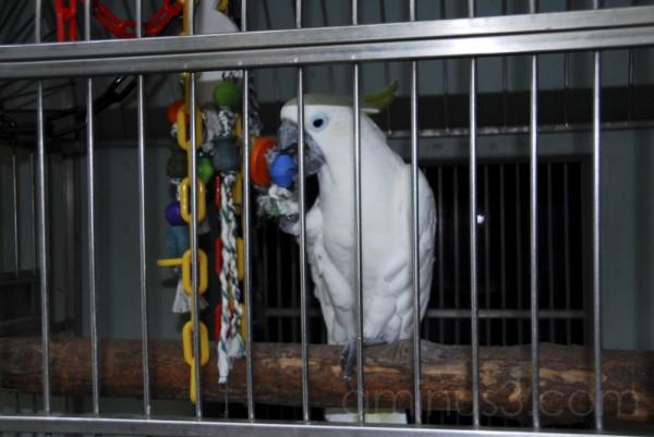 Jailbirds (2)
