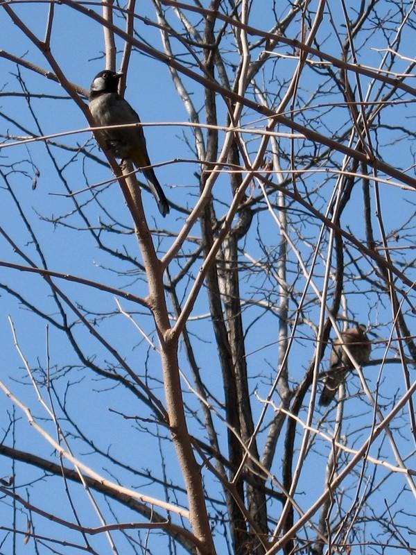 Bird+Tree