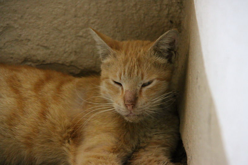 گربه دم خونه مون Cat