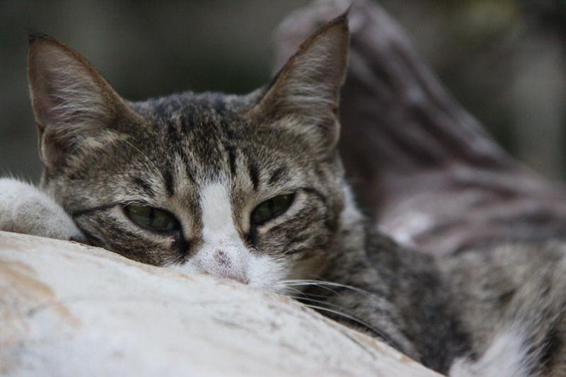 گربه تو پارک ساعی CAT