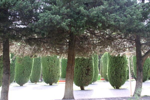 پارک ساعی Saei Park