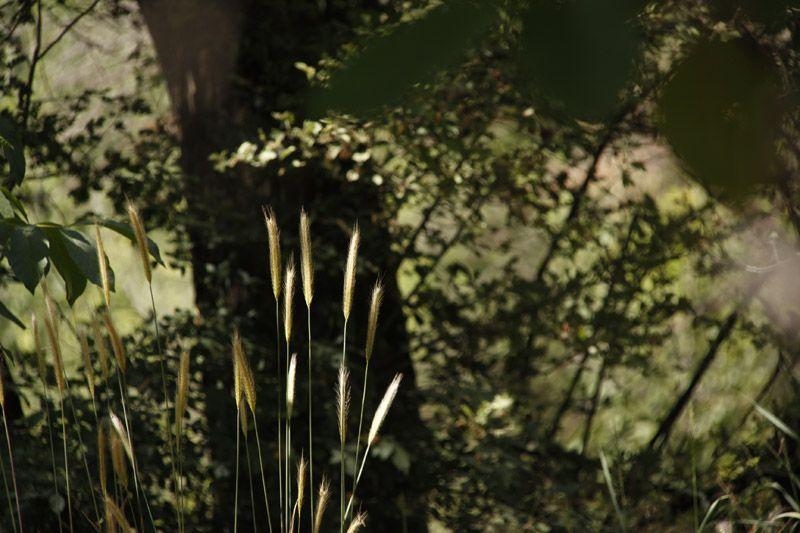 Plant & Nature