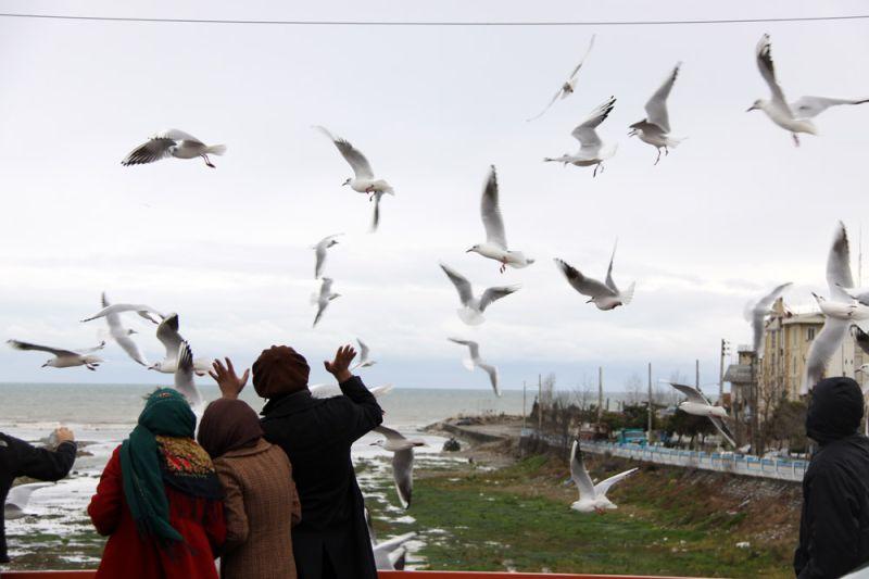 مرغان ماهیخوار و مردم روی پل شهسوار