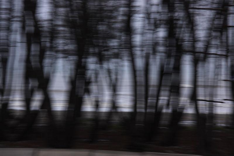 گاهی ما از کنار درختان عبور میکنیم، گاهی درخت ها ا
