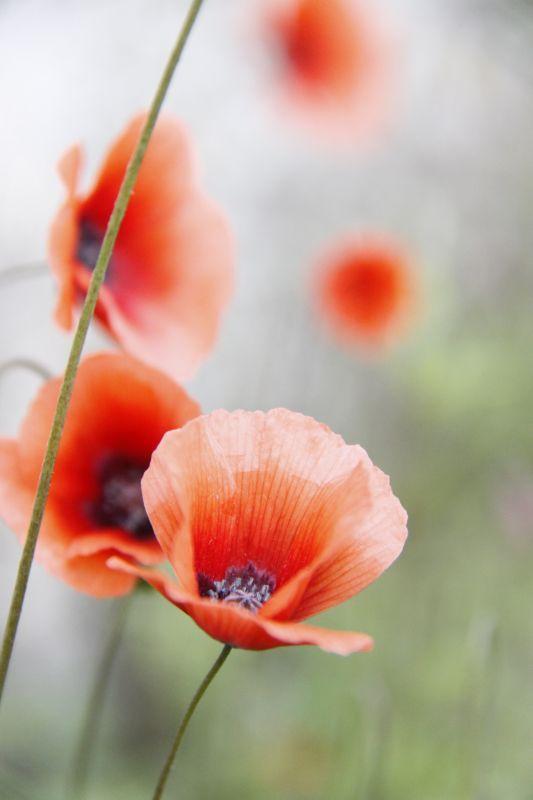 Copse Flower