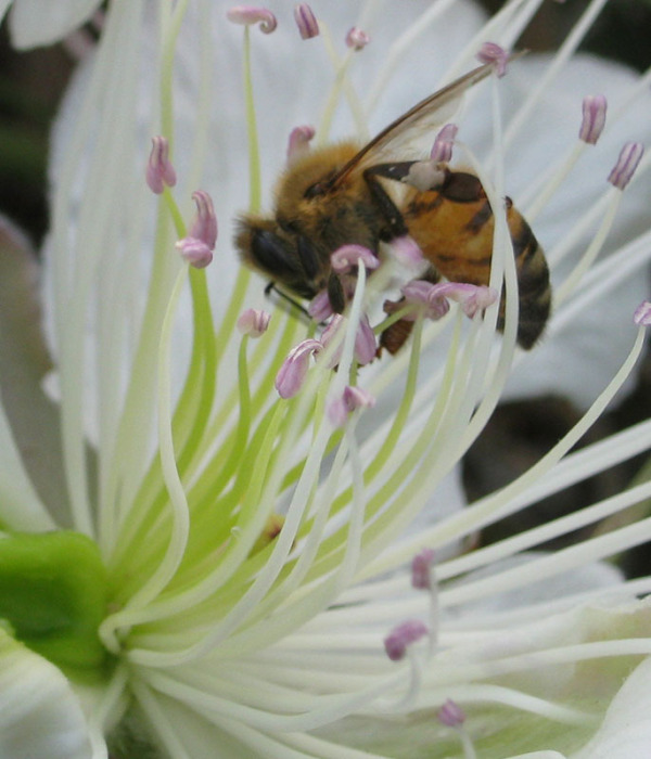 Bee زنبور عسل