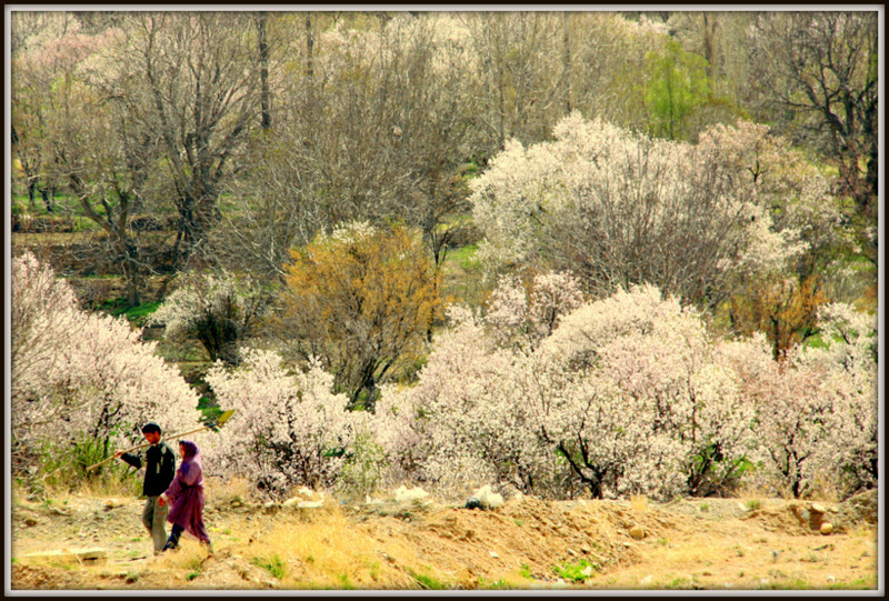 Couple and Spring blossoms