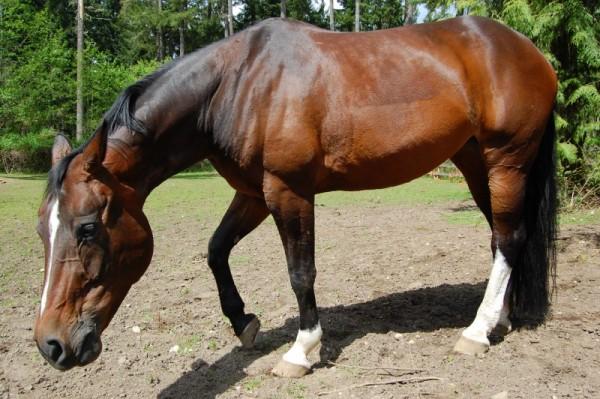 Horse photo shoot 4