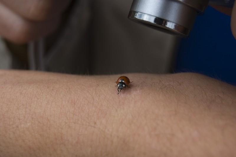 Ladybug Photoshoot