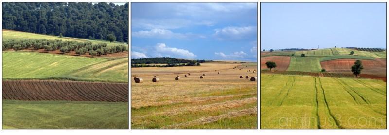 field  summer