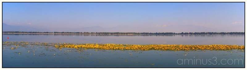 kerkini lake VI