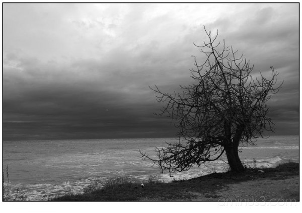 tree by the sea I