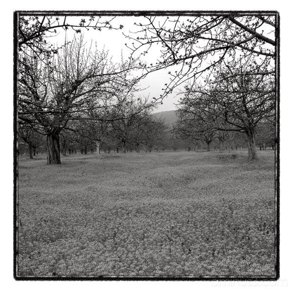 trees landscape