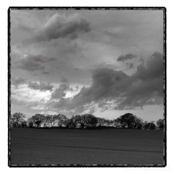 storm landscape trees
