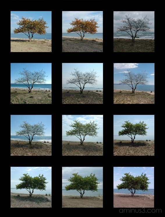 tree seasons
