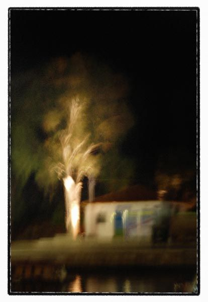 night tree motion blur