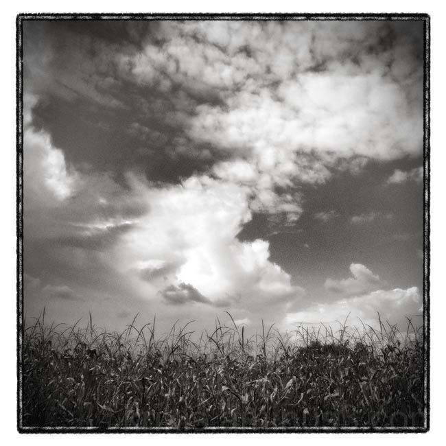plants & sky