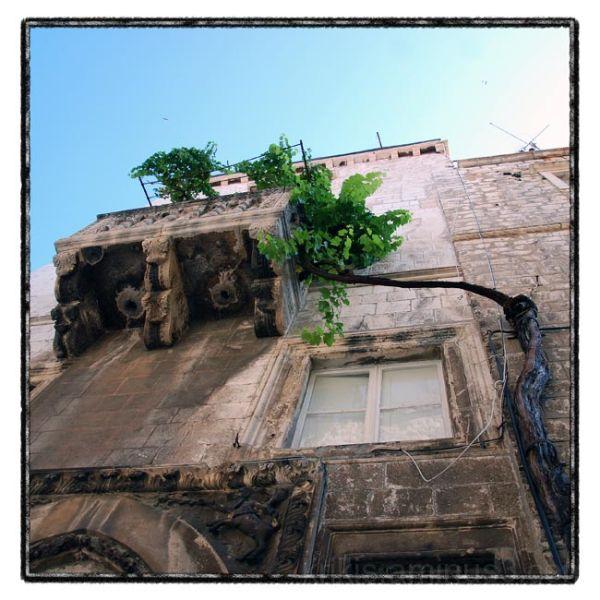 dubrovnik series / balcony & vine