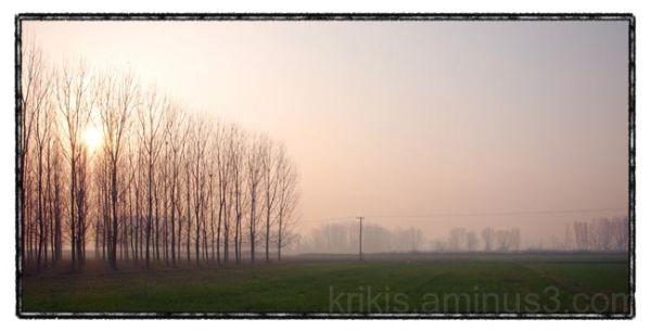 trees & power