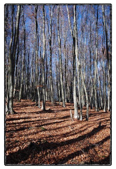 forest walk II