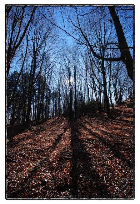 forest walk III