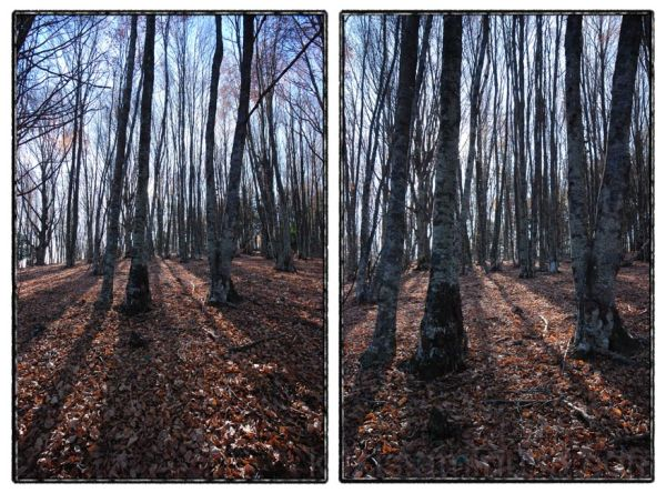 forest walk VI