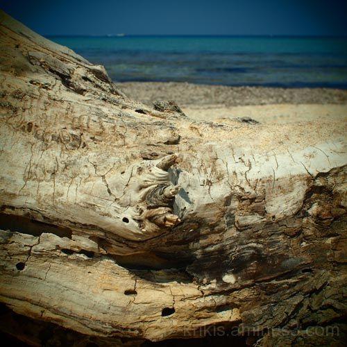 wood 2/4