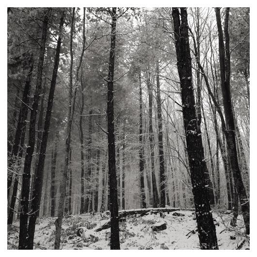 forest detail 2