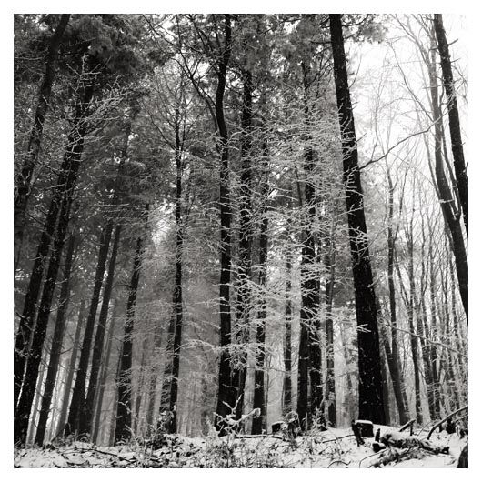 forest detail 3