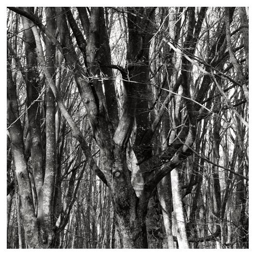 forest detail 7