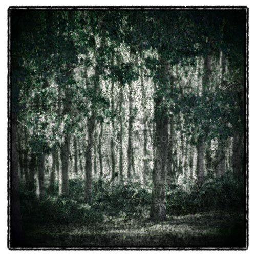 kerkini forest