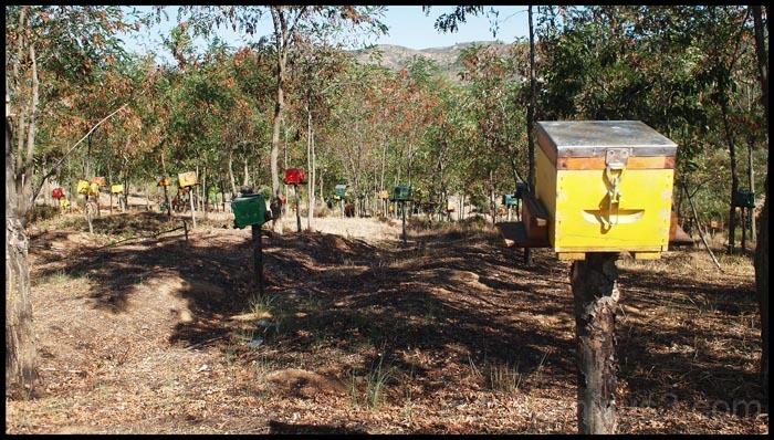 bee village