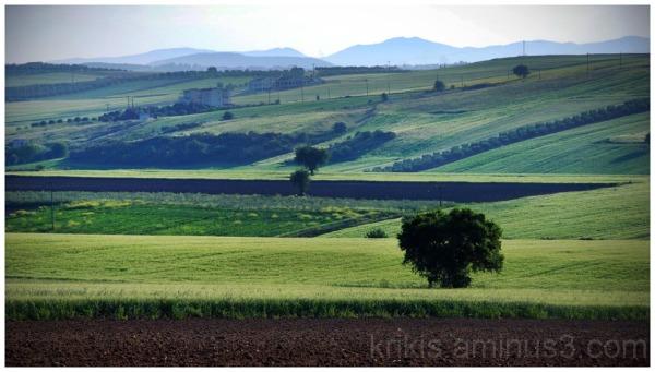 fields 4