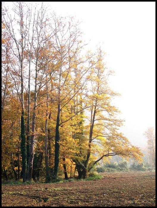 fall landscape I
