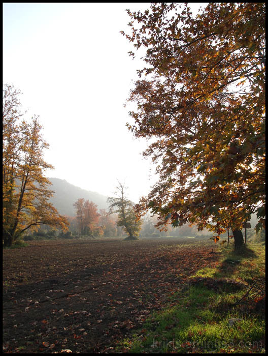 fall landscape II