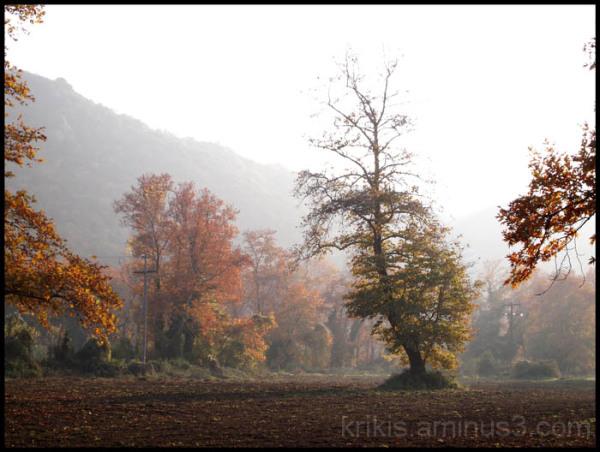 fall landscape III