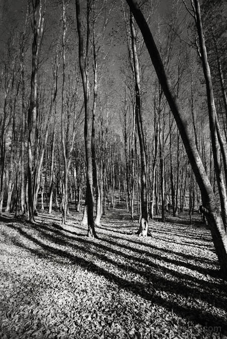 forest walks I