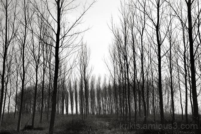 forest walks III