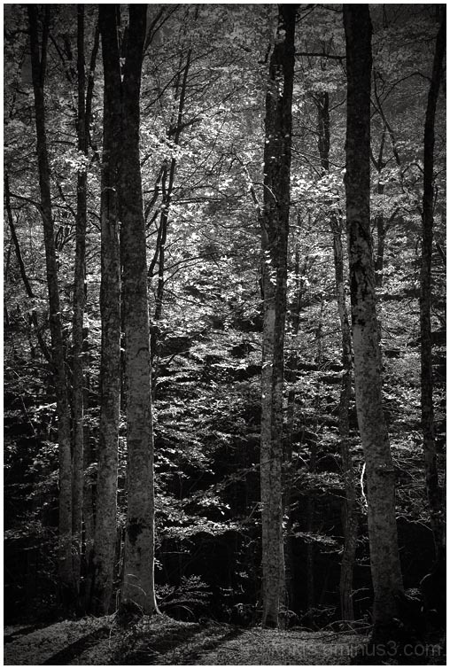 forest shots I