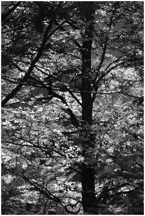 forest shots III
