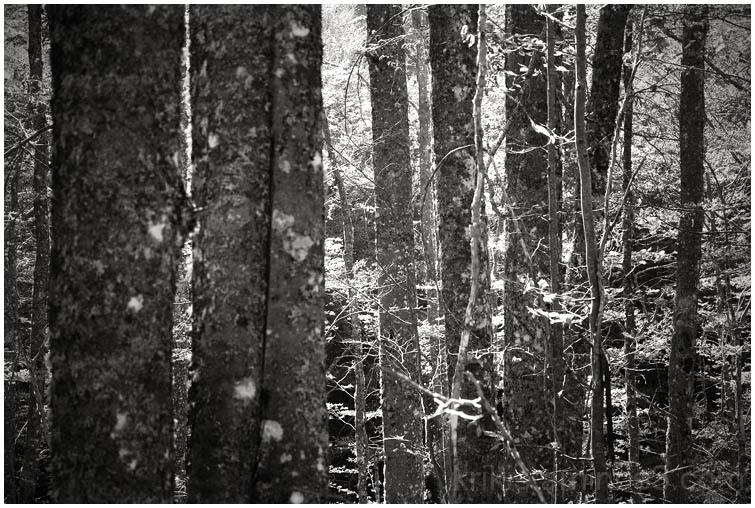 forest shots V