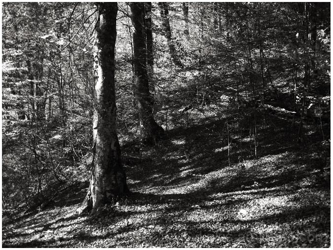 forest shots VI