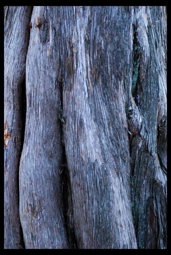 Closeup of tree trunk at sunset.