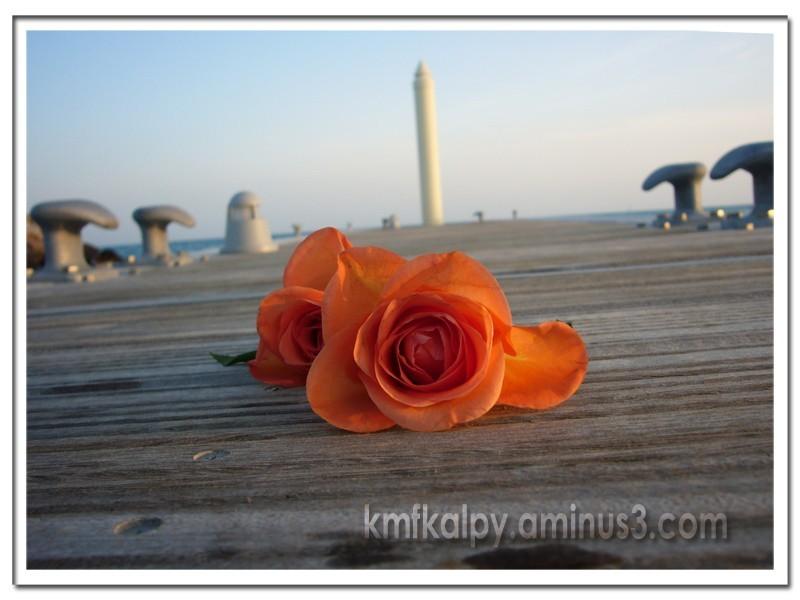 sing of Love,kmfkalpy,love,flower