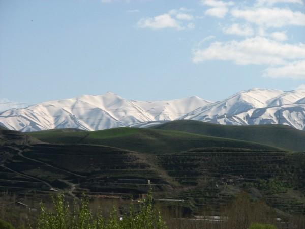 snowgreen