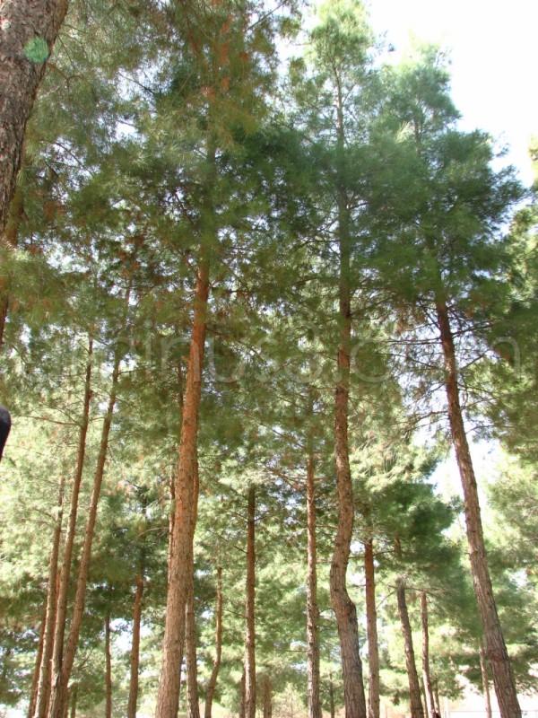 trees on kermansha