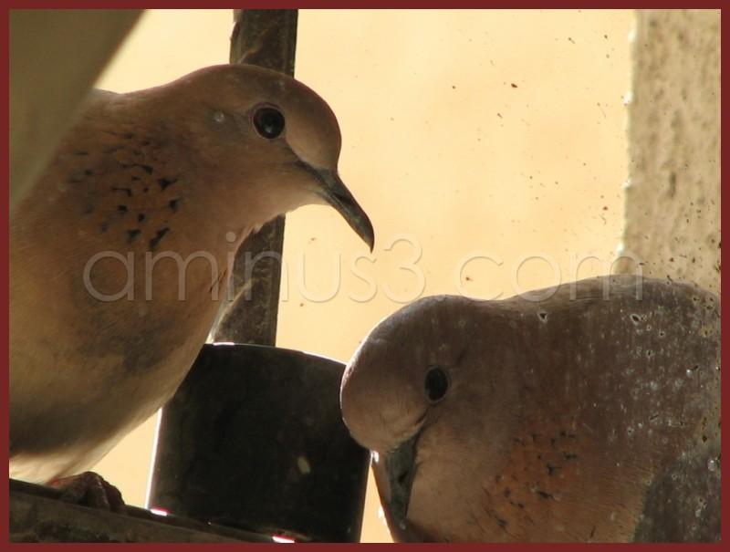 2 birds behind window