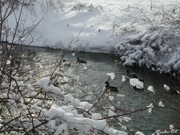 Winter in Waterloo, 2005